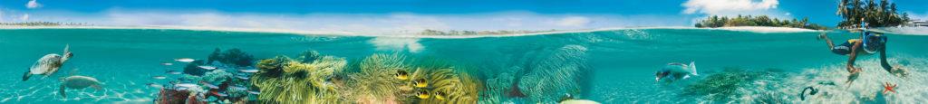 undersea frieze