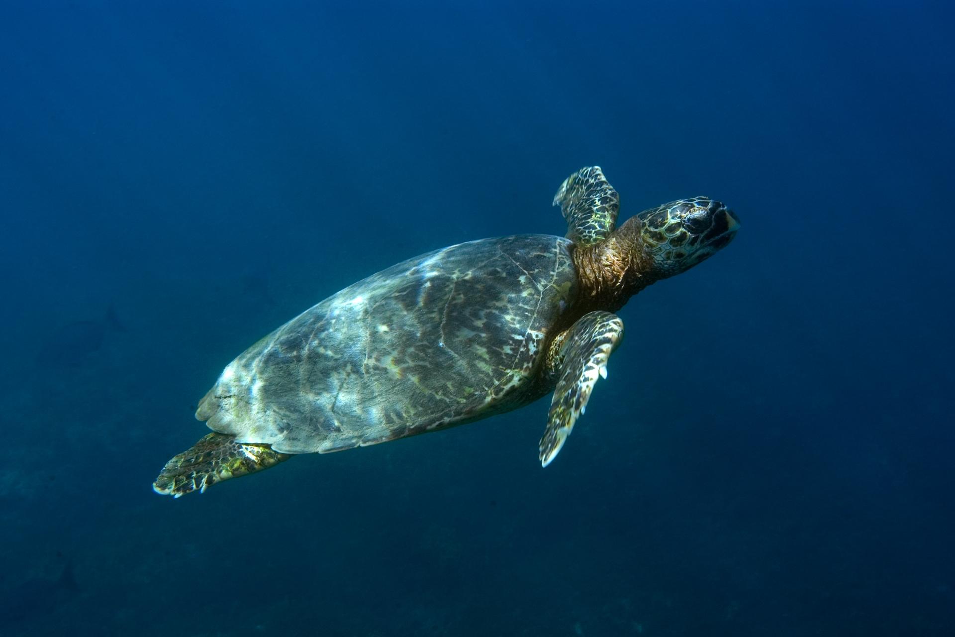 multi-image composition deep sea turtle