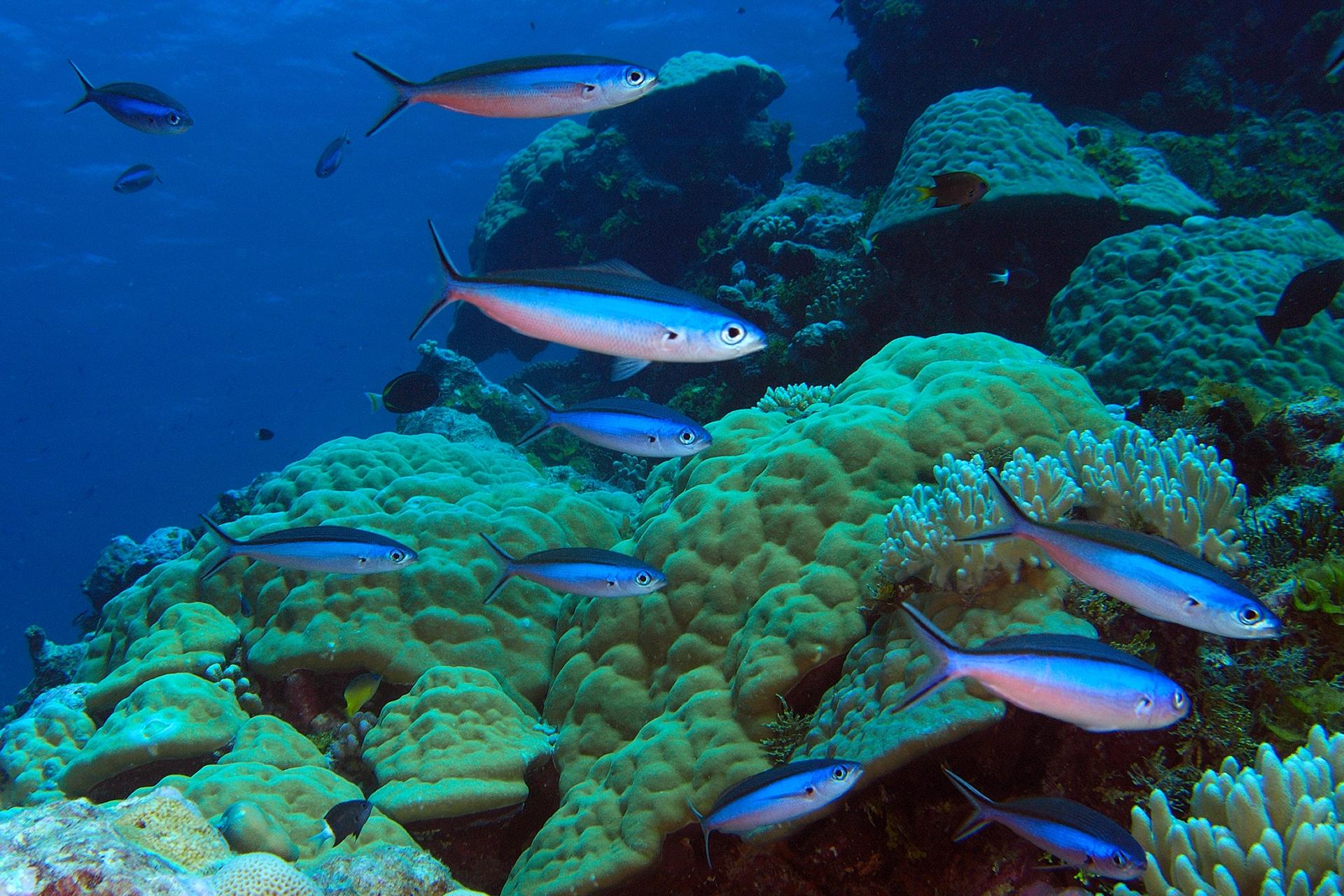 multi-image composition School of fish